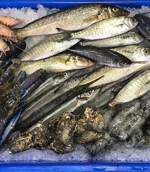 Wildcatch Fisheries SA Inc.