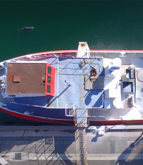Australian Maritime and Fisheries Academy