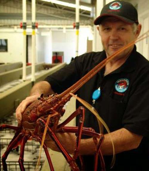 Indian Ocean Rock Lobster