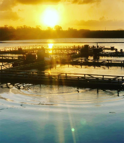 Rocky Point Aquaculture