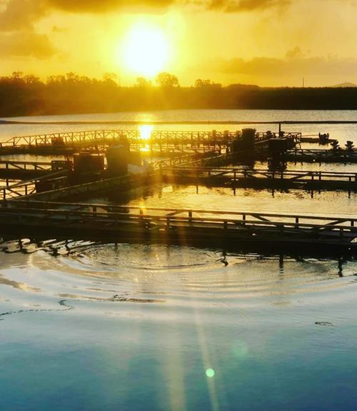 Rocky Point Aquaculture